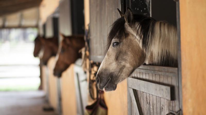 horse dept.jpg